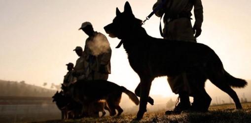 Тренування кінологів у зоні бойових дій